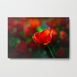 Red tulip - Mystery of blooming Metal Print