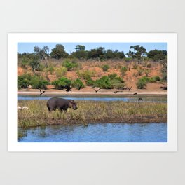 Hippo. Art Print