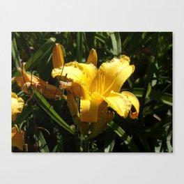 Beautiful Yellow Iris Open to the Sun Canvas Print