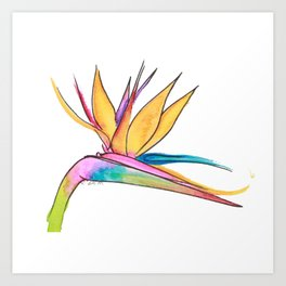 Oiseau du paradis Art Print