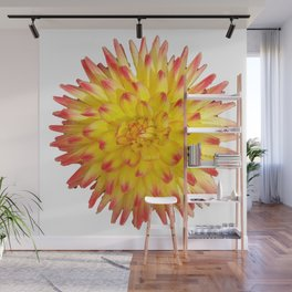 A Yellow Dahlia with Pink tips on a transparent background Wall Mural