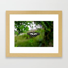 Butterfly Small Framed Art Print