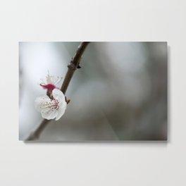 Flower PW 02 Metal Print