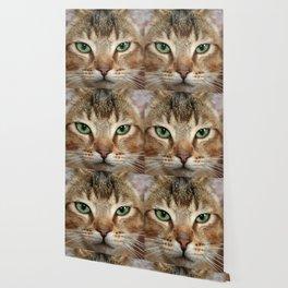 Face of Brown Cat Wallpaper