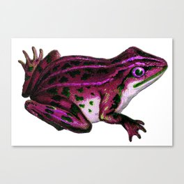 Pinky the Frog Canvas Print
