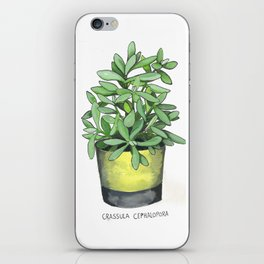 Crassula Cephalopora iPhone Skin