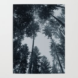 Sky through the trees black and white woods photography Poster