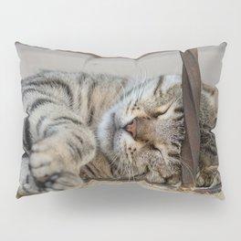 Cute sleeping cat in Izmir in Turkey Pillow Sham