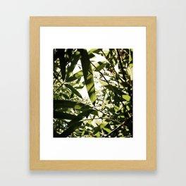 bamboo view Framed Art Print