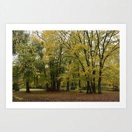 Malmsbury Botanic Gardens No. 1 Art Print