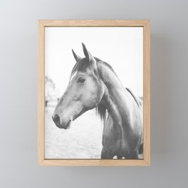 bw horse, equestrian, black and white horse, thoroughbred Framed Mini Art Print