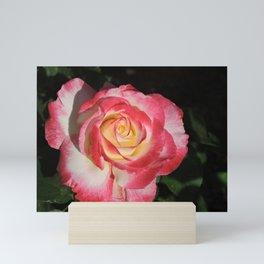 Multi-Hued Rose Mini Art Print