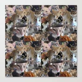 Cats of the neighborhood pattern Canvas Print