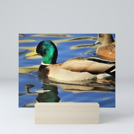 Mallard Duck Reflects on the Water by Reay of Light Mini Art Print