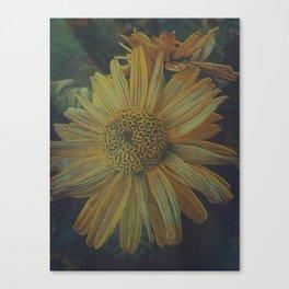 Crazy Daisy Canvas Print