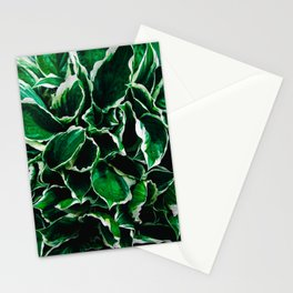 Hosta undulata albomarginata vibrant green plant leaves Stationery Cards