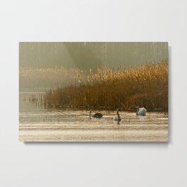 Lake of swans Metal Print