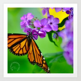 Butterfly Wings and Pixie Dust Art Print
