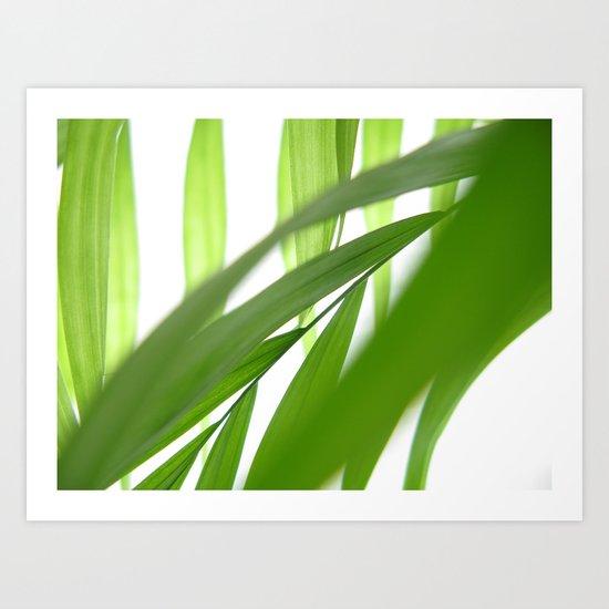 Palm 10 Art Print