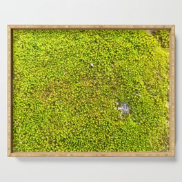 Moss, Nature Trails for Life Serving Tray