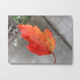 Changing Colors Metal Print