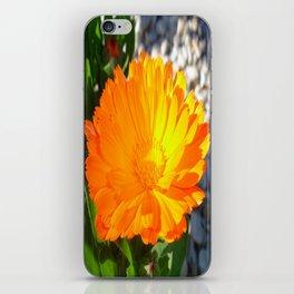 Bright Orange Marigold In Bright Sunlight iPhone Skin