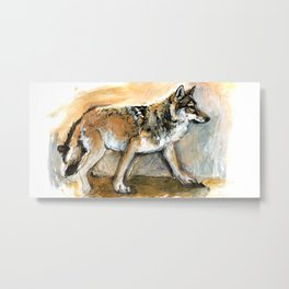Tibetan Wolf (c) 2017 Metal Print