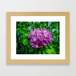 Fine Wine Cafe Light Purple Rhododendron Framed Art Print