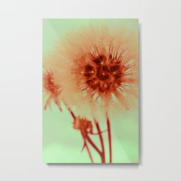 blowing dandelion X Metal Print