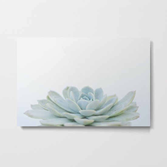 succulent 02 Metal Print