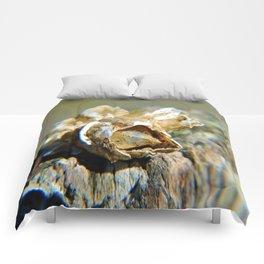 Barnacle  Comforters