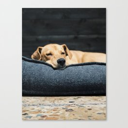 Dog by Tj Kolesnik Canvas Print