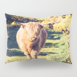 Lovely Scotland Highland Cow (Scottish Highland Cattle) is walking in the sun Pillow Sham