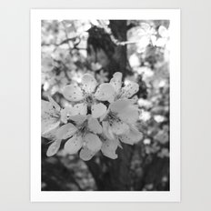 Places in Black & White: Plum Tree 6 Art Print