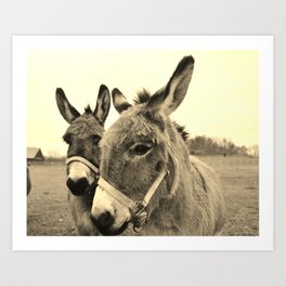 Donkey Love Art Print