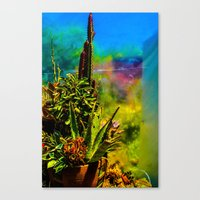 cacti Canvas Prints featuring Cacti   by Ashley Hirst Photography