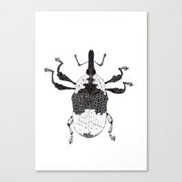 weevil Canvas Print