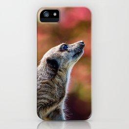 Inquisitive. iPhone Case