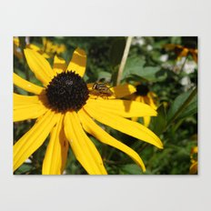 Yellow Flower #1 Canvas Print