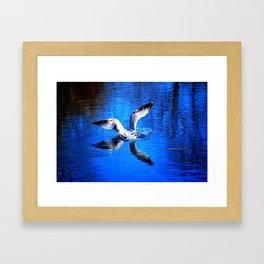 Seagull 3 Framed Art Print
