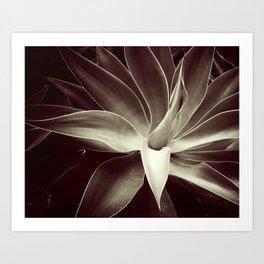 mocha java agave Art Print