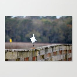 Snowy Walking The Line Canvas Print