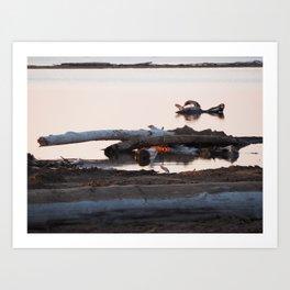 Swan or Driftwood Art Print