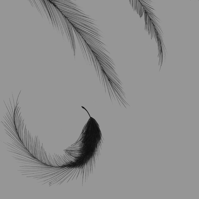Feathers Leggings