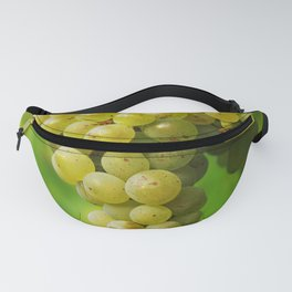 White wine grapes Fanny Pack