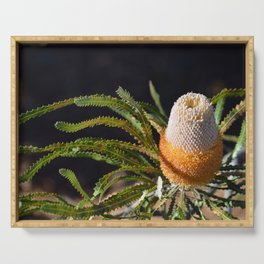 Acorn Banksia Serving Tray