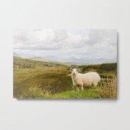 A sheep in the Irish hills Metal Print