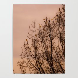 spring lilac sky Poster