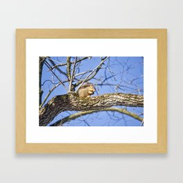 Squirrel in Nature Framed Art Print