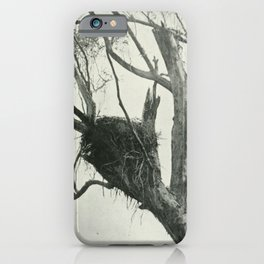 Vintage Print - The Birds of Tasmania (1910) - Nest of Wedge-Tailed Eagle iPhone Case